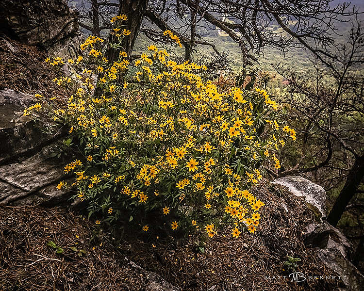 Yellow flowers-49